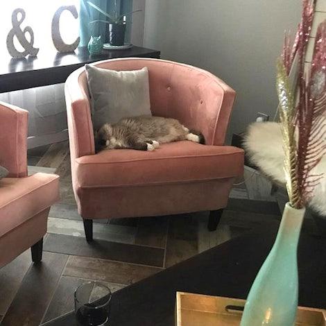 Leigh Chair - Photo by Cara Silverthorne