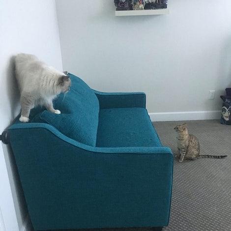 Brooks Twin Sleeper Sofa - Photo by Rachael Shinoskie