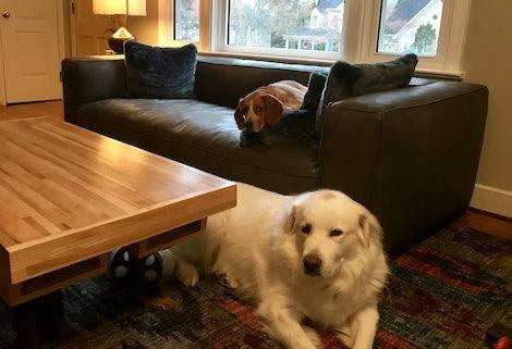 Jaxon Leather Sofa - Photo by Christy Doyle