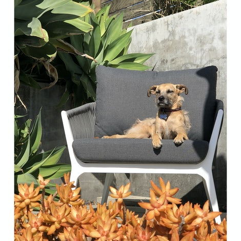 Rizzo Outdoor Chair (Set of 2)  - Photo by Cody Trepte